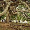 Legenda Pohon yang Membuat Sejarah Manusia