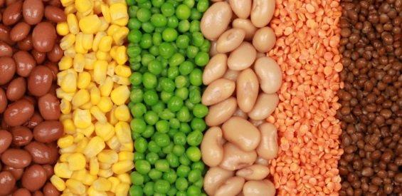 Seberapa Banyak Protein Nabati Diperlukan Ini Jawabannya