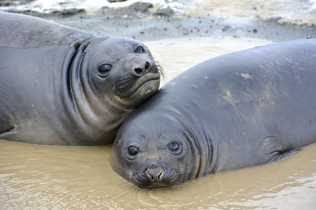 16+ Hewan yg sudah punah di laut terupdate
