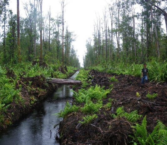 Gambut Indonesia Berkontribusi Atasi Perubahan Iklim, Begini Penjelasannya