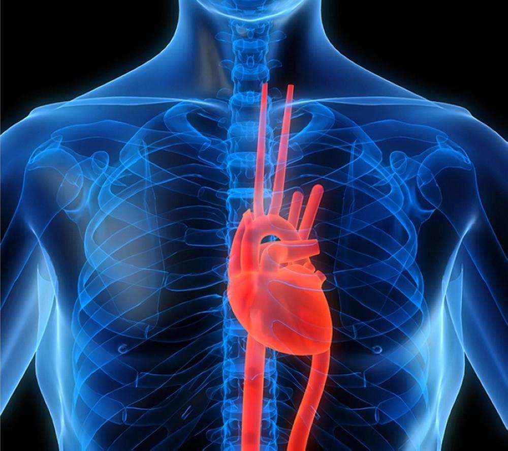 Peneliti ciptakan miniatur jantung manusia dari jantung tikus. (Ilustrasi:Alrai)