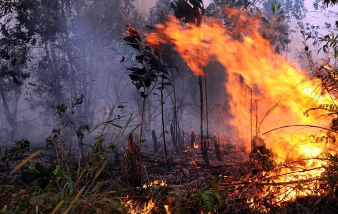 The Task of Oil Palm Companies to Prevent Forest Fires