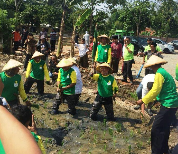 Ini Alasan DPP Pertanu Buka Lahan Percontohan Di Karawang
