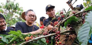 Ketua MPR Gelar Panen Raya Bersama Petani Kopi Lampung Barat