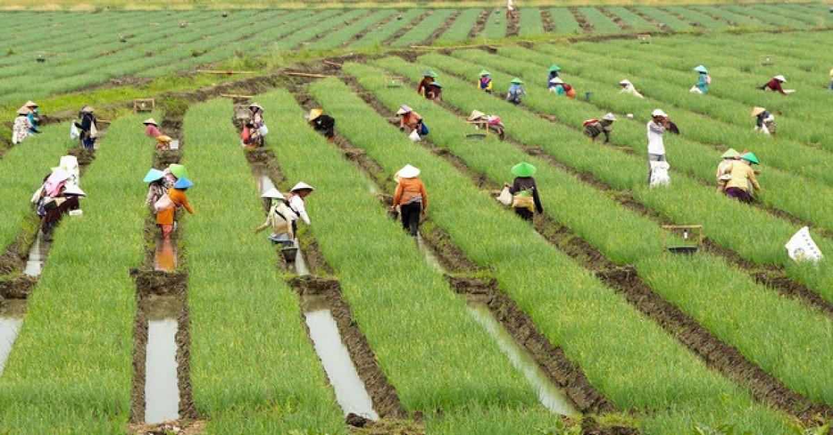 Bangun Daerah Pengamat Sektor Pertanian Lebih Utama Ketimb