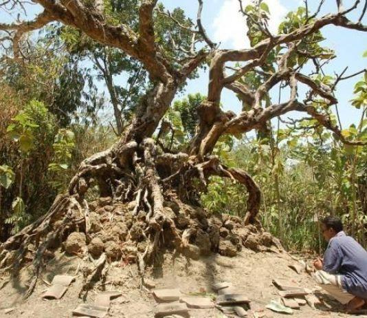 Menyingkap Mitos Pohon-Pohon Berkekuatan Gaib