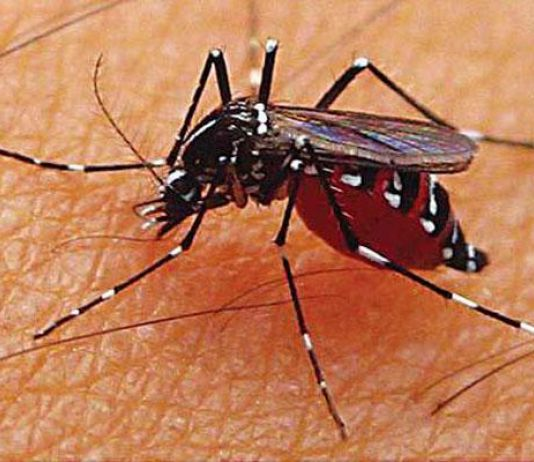 Waspada, Filariasis Ditularkan Melalui Semua Jenis Nyamuk