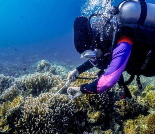 Liburan Singkat, Yuk Ikutan Nyelam di Pulau Seribu