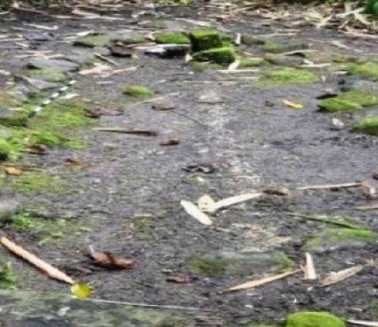 Arkeolog Teliti Temuan Gambar Cadas 'Rock Art' di Pulau Kisar Maluku