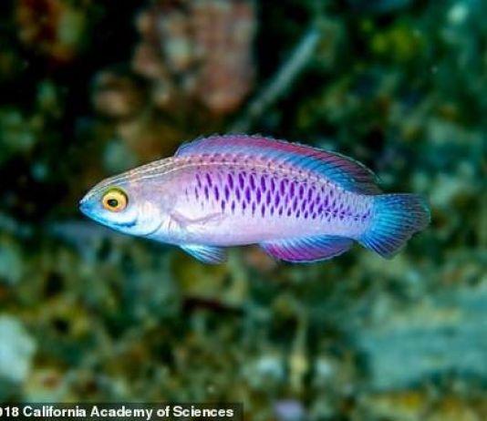 Spesies Ikan Baru Ditemukan di Tanzania, Namanya Wakanda