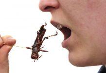 Tak Terduga, Makan Serangga Bisa Lindungi Diri Kita dari Kanker