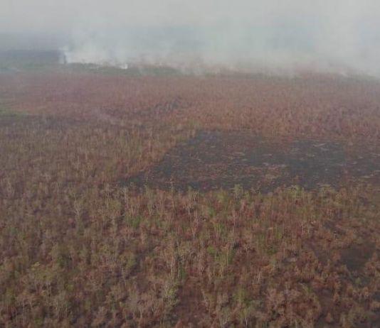 49 Titik Panas Terdeteksi di Wilayah Kalimantan Tengah