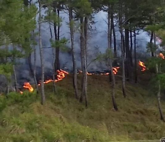 KLHK Mencatat Sebanyak 135.747 Hektare Hutan Terbakar Sepanjang 2019