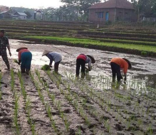 Dibanding KKN di Desa Penari, Vero Santun tapi Tetap Diganggu Roh Penunggu Desa