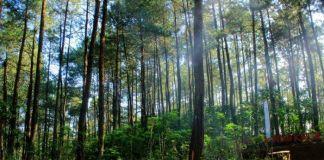 Geger Pemuda Linglung usai Diajak Sosok Perempuan Misterius ke Hutan