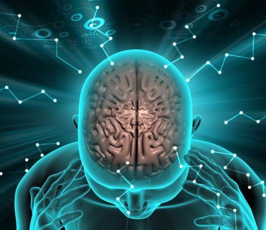 Apa Benar, Miliki Otak Besar Berarti Ingatannya Lebih Baik?