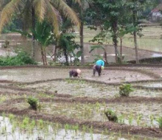 Beban Desa Makin Berat, Siapkah Pikul Dampak COVID-19?