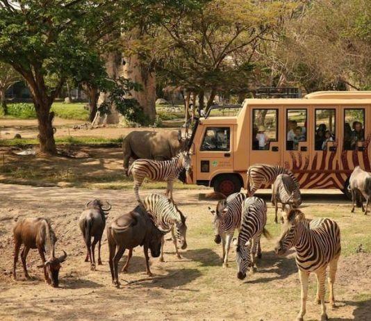 Kangen Liburan? Kabar Gembira Taman Safari Siap Dibuka
