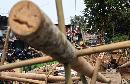 Penjual Batang Pohon Pinang